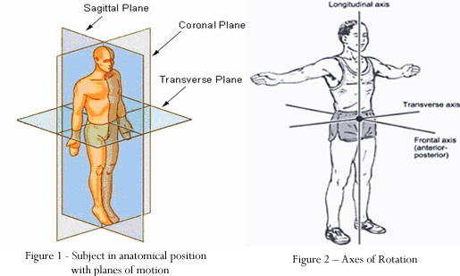 Anatomical Movements Sports Science Degree Physical Education